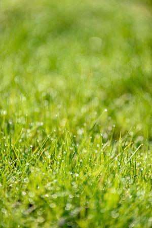 Beautiful green lawn freshly mowed with rain dew and background blur bokeh Zdjęcie Seryjne