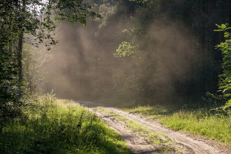 simple country gravel road in summer at countryside forest with trees around and clouds in the sky