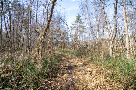 old road in forest in springtime with brown leaves and first foliage growing. sunny day Stock Photo