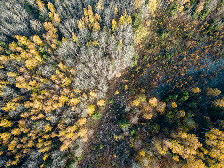 drone image. aerial view of rural area in autumn with yellow and red colored trees in forest from above. latvia, day of colorfull fall