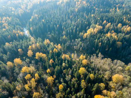 drone image. aerial view of wavy river in autumn colored forest. Gauja river in Latvia