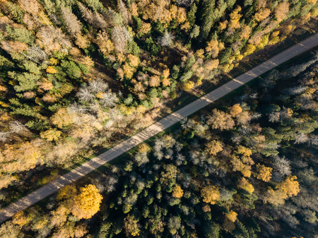 drone image. aerial view of rural area with gravel road in autumn colored fields and forests. latvia
