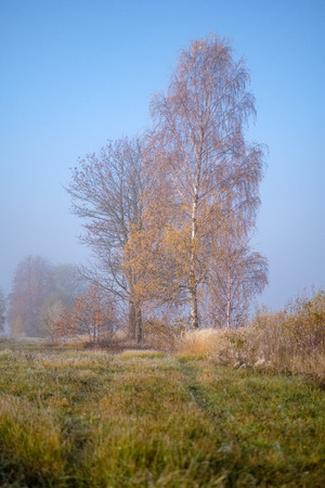 pleasing the senses or mind aesthetically lonely autumn trees hiding in mist in fall colored meadow