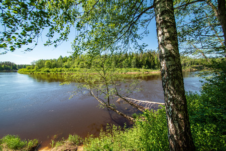 calm river with reflections of trees in water in bright green foliage in summer in forest near Cesis, Latvia. River of Gauja in evening sun with sandstone cliffs