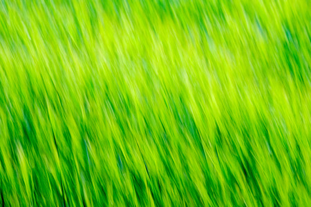 summer green meadow with abstract pattern from grass and flowers. sunny day in Latvia