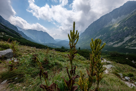 western carpathian mountain panorama in clear day. Tatra hiking trails for tourists. far horizon