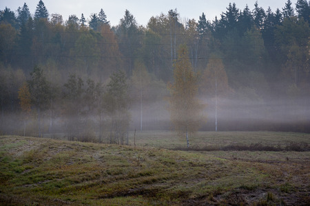 foggy country road in autumn with mist and asphalt. fall colors