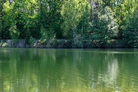 calm summer day view by the lake with clean water and water grass, bents, and green foliage near forest Фото со стока