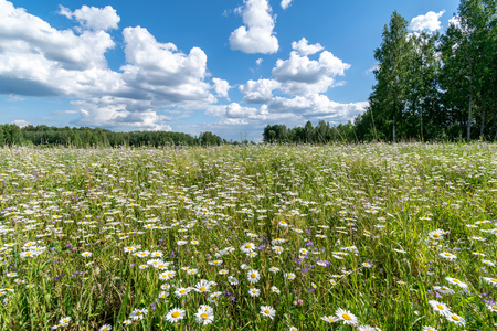 sunny meadow with different flowers in summer day with clear weather