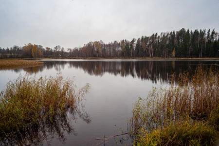 natural body of water. pond with reflections of trees and clouds in calm water surface