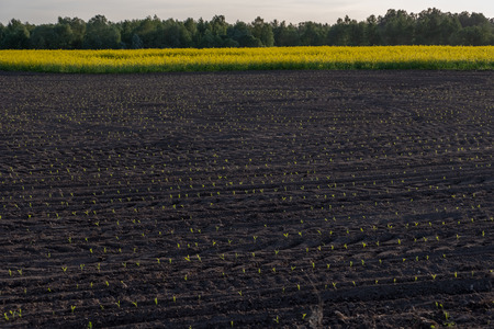 freshly cultivated agriculture fields ready for growing food Stock Photo