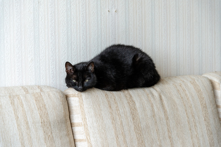 domestic cat in natural environment in apartment on furniture