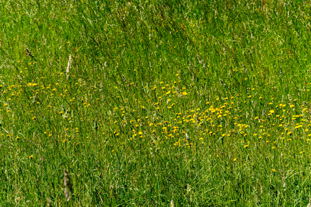 beautiful green meadow with summer flowers near forest in warm summer day. foliage texture