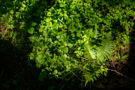 green foliage in summer with harsh shadows and bright sunlight in forest 写真素材