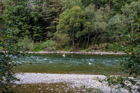 green water river behind the trees in summer. Dunajec, Slovakia