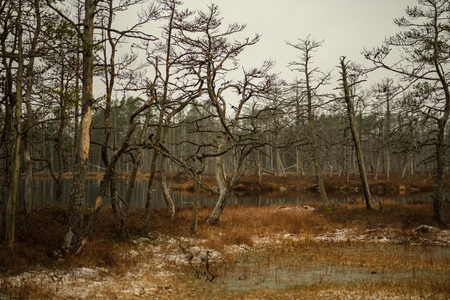 swamp landscape view with dry distant trees, and first snow on green grass. dull evening lightning. dark shadows 스톡 콘텐츠