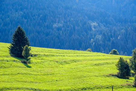 multi level fields and forests in mountain area. Slovakia. mist over trees and meadows Stock Photo