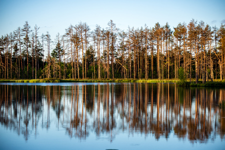 late evening sun over swamp lakes in summer, reflections in calm water and green foliage 版權商用圖片