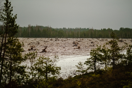 turf fields in swamp area beeing cultivated for harvest. landscape in early winter with first snow, view through the trees Banco de Imagens