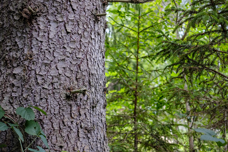 forest details with tree trunks and green foliage in summer. texture and abstract background image