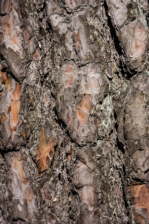old dry tree trunk stomp texture with bark in nature