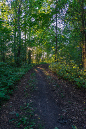 tourist hiking trail track in green summer forest with dark ground and green foliage under sunlight and harsh shadows 写真素材
