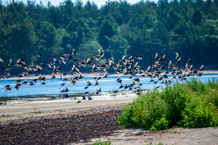 flock of wild birds resting in water near shore, summer green foliage