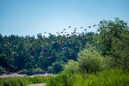 flock of wild birds resting in water near shore, summer green foliage