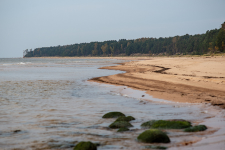 sandy sea beach with rocks and low tide in overcast day in autumn colors