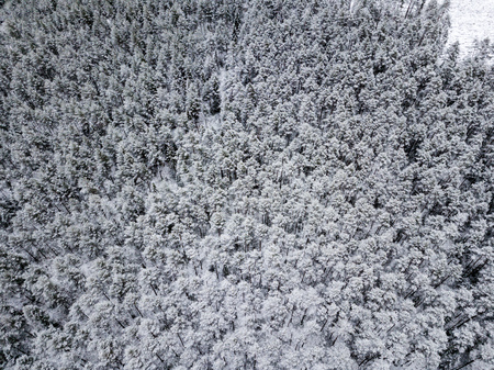 drone image. aerial view of forest area in winter with snowy trees. clean snow covered tree texture from above. Latvia