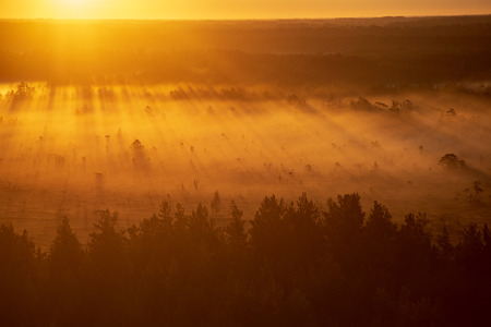 colorful misty sunrise over the forest with mist and light rays in fog