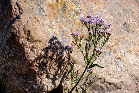 irregular dry plants on rock covered beach on the island. poor vegetation on the beach