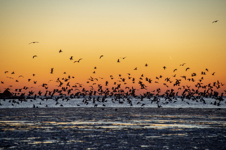 dramatic red sunset over the frozen sea on the beach with ice blocks in water. large crowd of birds resting on ice and flying away