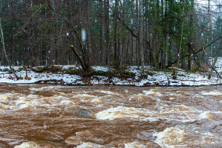 fast river stream in white winter forest. cloudy day with dark brown water rushing in snowfall
