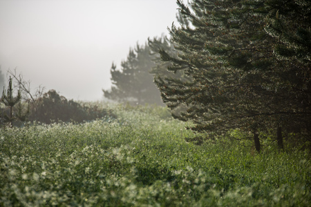 sun rising in mist covered forest. sun rays in fog with low visibility Banque d'images