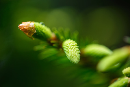green spring foliage macro close up in nature. textured background image, blur background