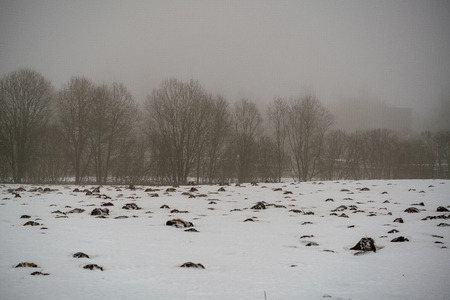 mole camuflage molehill pattern in the field with snow and mist in countryside, wide angle view