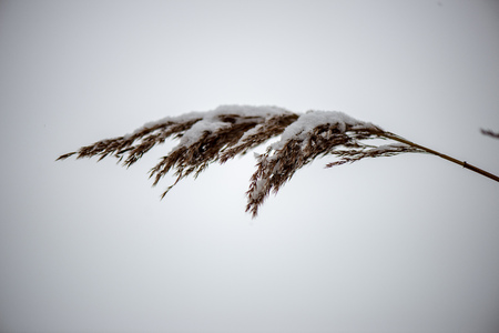 frozen grass bents in winter above snow patterned texture