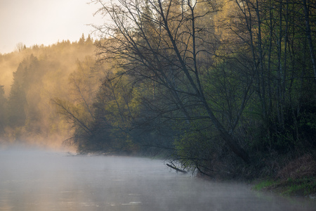 beautiful misty morning on the natural forest river Gauja in Latvia. fog floating over calm water stream with first rays of sun