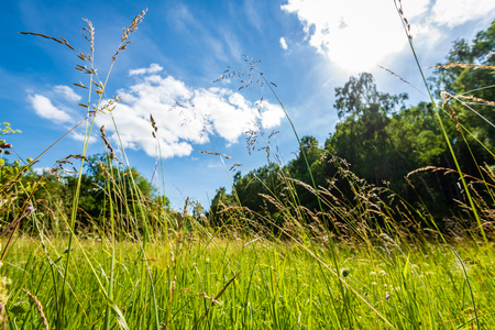 beautiful meadow with blooming flowers in sunny day in summer. colorful background Stockfoto