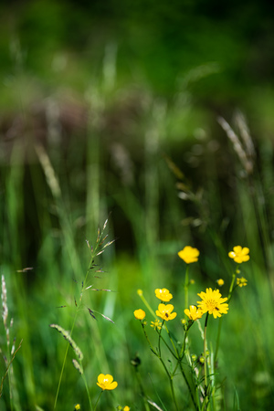 beautiful meadow with blooming flowers in sunny day in summer. colorful background Stock Photo