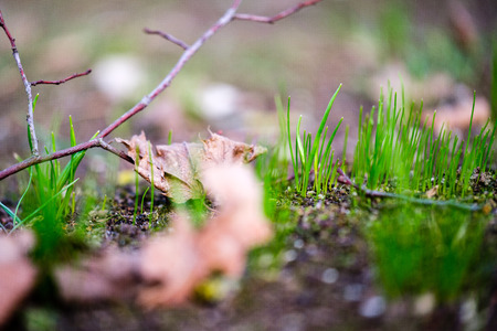 first green grass growing from naked spring soil in the park