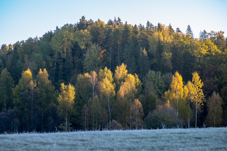 first winter frost in sunrise light in countryside. frosty tree leaves and grass in fields with autumn colored trees in background 写真素材