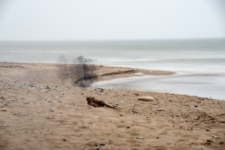 empty sea beach in autumn with lonely trees and rocks in sands. overcast day