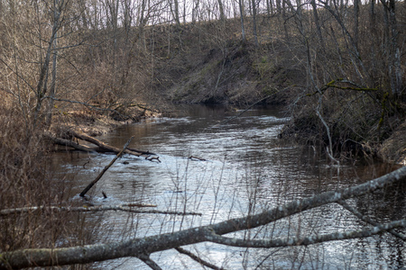 dirty forest river in spring. water contaminated with old tree trunks and leftovers Stock Photo
