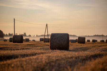 rolls of dry hay in field at countryside autumn weather with sun rays and fog in background. early morning country scene