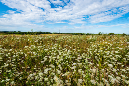 beautiful meadow with blooming flowers in sunny day in summer. colorful background 写真素材