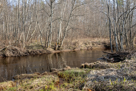 dirty forest river in spring. water contaminated with old tree trunks and leftovers