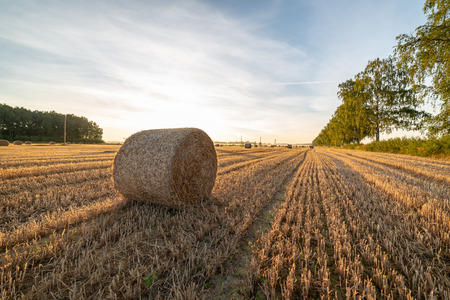 rolls of dry hay in field at countryside autumn weather with sun rays and fog in background. early morning country scene Reklamní fotografie