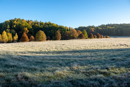 first winter frost in sunrise light in countryside. frosty tree leaves and grass in fields with autumn colored trees in background Banco de Imagens